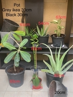 Used Plants and pot in Dubai, UAE