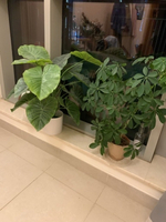 Used Plant, artificial and live  in Dubai, UAE