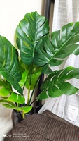 Used Artificial Monstera plant in Dubai, UAE