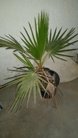 Used Beautiful Plant in Dubai, UAE