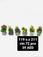 Used Plants with pot in Dubai, UAE