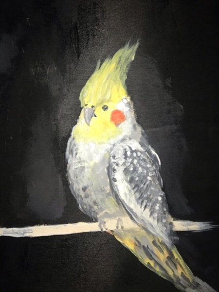 Used Parrot painting in Dubai, UAE
