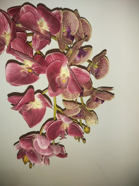 Used LOOKS REAL Artificial orchid flower in Dubai, UAE