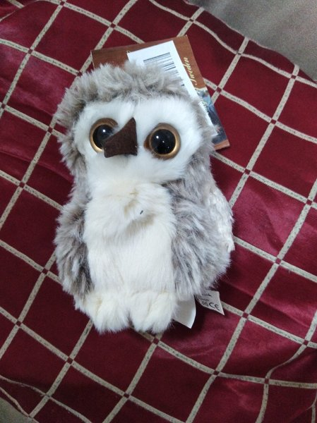 Used Teddy Bear Owl in Dubai, UAE